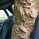 Pest control Devonport Auckland wasps