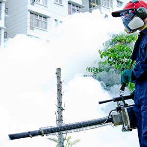 Pest fumigation Auckland