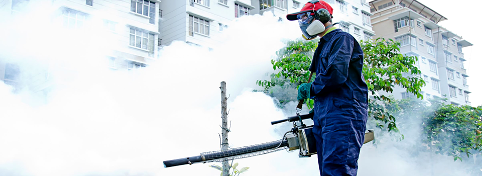 Pest fumigation Auckland