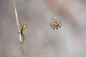 SPIDER FLEA SPRAY EAST AUCKLAND FLIES 1
