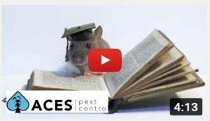 rat extermination west auckland